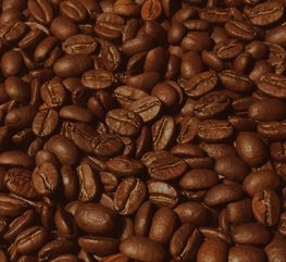 kaffeeanbau19